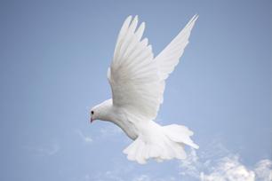 Homepage Sliders Dove